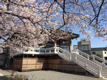 堺南御坊 桜